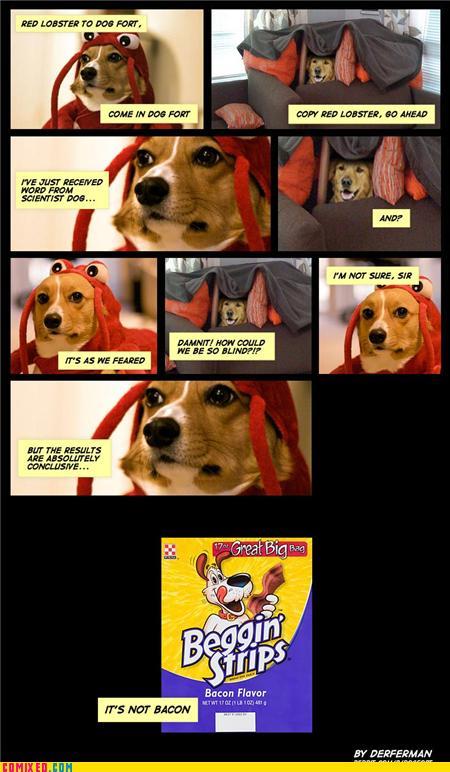 Dogfort2
